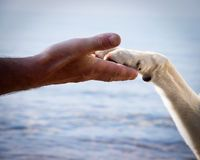 Paw in hand (17) Royalty Free Stock Photography