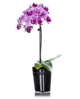 Mini Orchid in Ceramic