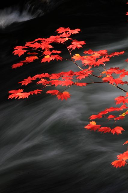 """Japanese colors 京緋色 - Japanese has many words for colors. This is 京緋色 kyo-hiiro and means """"Kyoto scarlet""""."""
