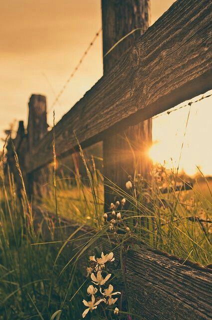 ...En aquel banquillo, bajo la sombra de un árbol y la brisa suave saqué tiempo para hablar con Dios. Di gracias por las pruebas y las situaciones adversas pues en ellas Él también moldea mi carácter. -SA