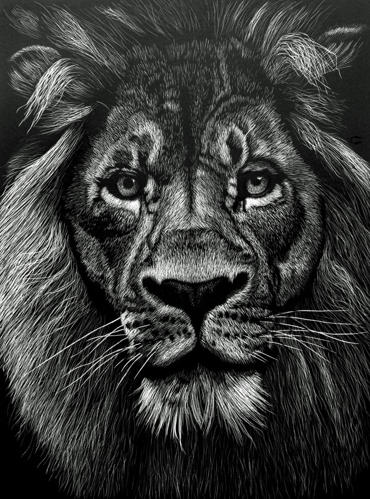 The King Male Lion SOLD