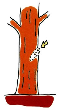 Восстановление погибающего дерева