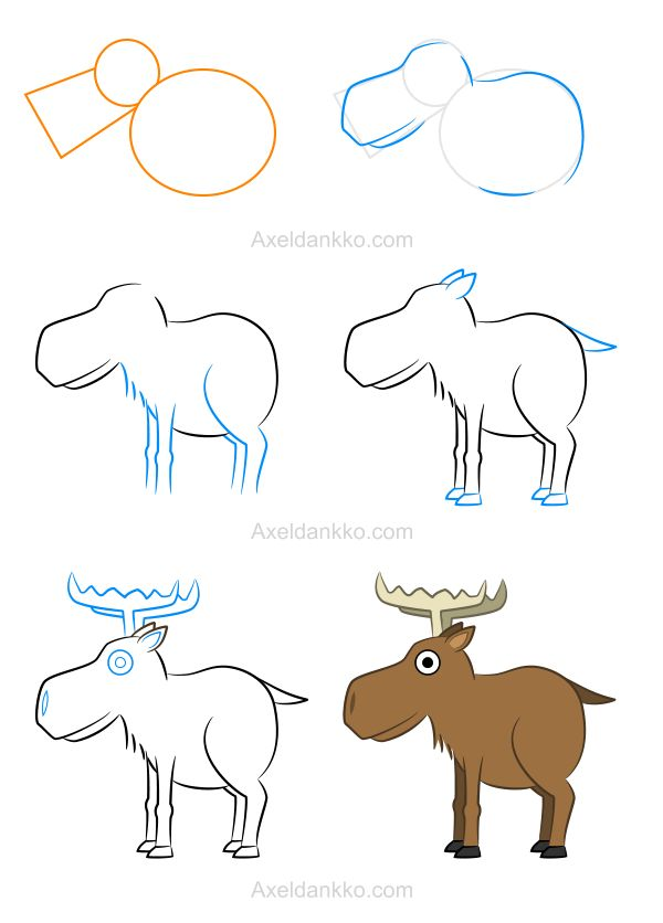 47 best animals complex images on pinterest drawing for How to draw a moos