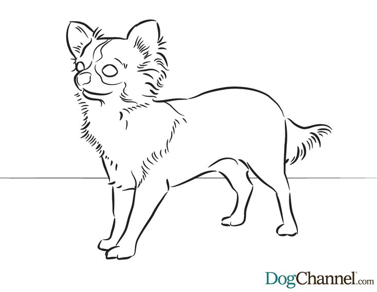 33 best images about printable color pages on pinterest for Chihuahua coloring pages free