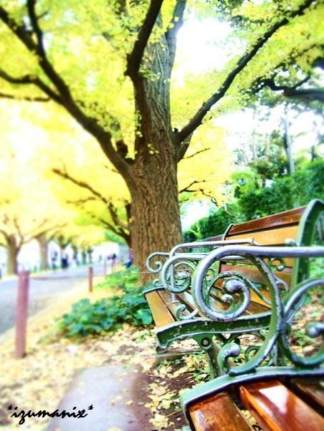 神宮外苑前 いちょう並木