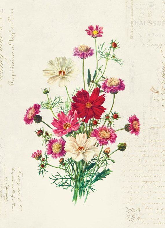 Vintage Botanical Floral on French Ephemera Print by OrangeTail