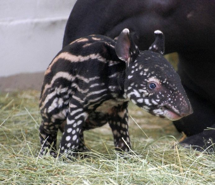 Denver Zoo Free Days: 101 Best Cute Baby Animals Images On Pinterest