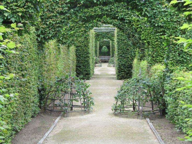 264 Best Espalier Images On Pinterest Landscaping