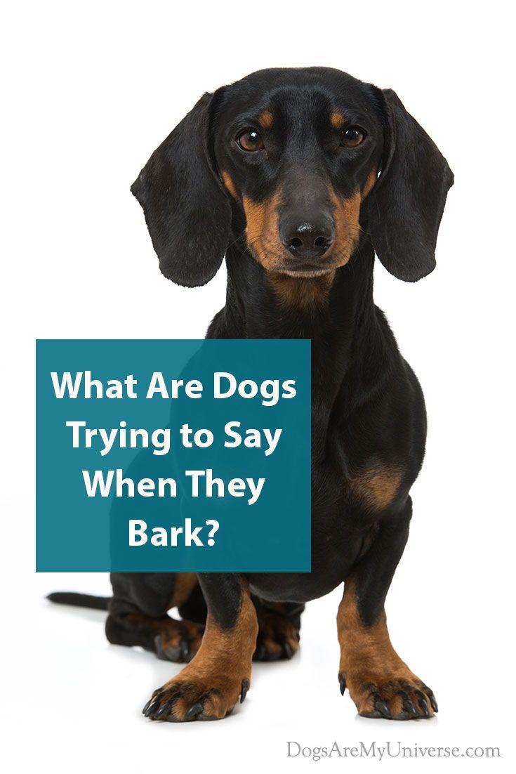 Reasons Why Dogs Bark Dogs Dog Behavior Dog Toys