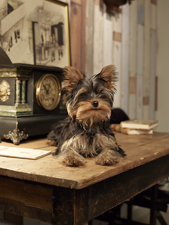 This little guy found his own space on Ingmar Bergman's desk at c/o Krägga Mansion. Write that down!