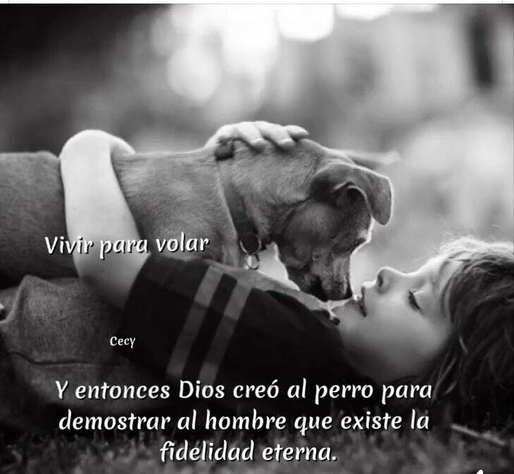 Y entonces Dios creó al perro para demostrar al hombre que existe la fidelidad eterna. ♥️