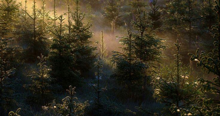 Untitled by Marko Häkkinen on 500px