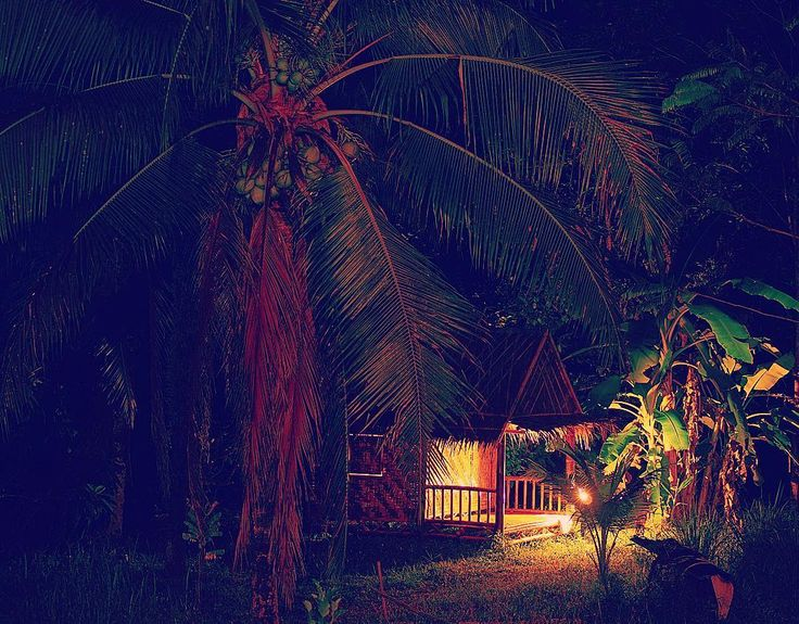 Better than a 5 ⭐️ hotel 🙌 what else do you need? 🏠🌴🌴🌴 🌠#little #bamboo #house #inthemiddleofthenight #jungle #stars #lights #shadow #palmtrees #coconuttree #night #black #nighttime #escape #amazing #amazingtravel #adventure #thailand #travel #podróże #travelling #perfect #photo #photographer #tropical #life #exotic #coconuts #instatravel