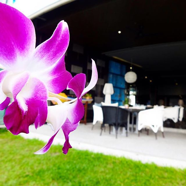 Blooming Orchid at La Perla Restaurant by Le Coral Hideaway Beyond Phuket.
