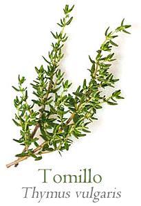 357 best Plantas medicinales images on Pinterest  Flowers Purple