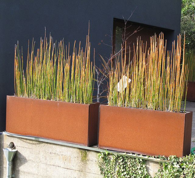 Corten steel planters with Horse Tail Rush