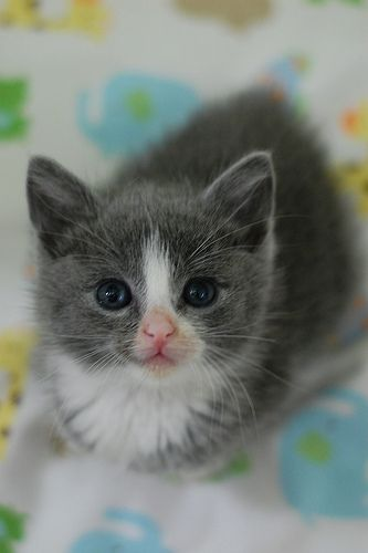 I am addicted to sweet little kitten faces.