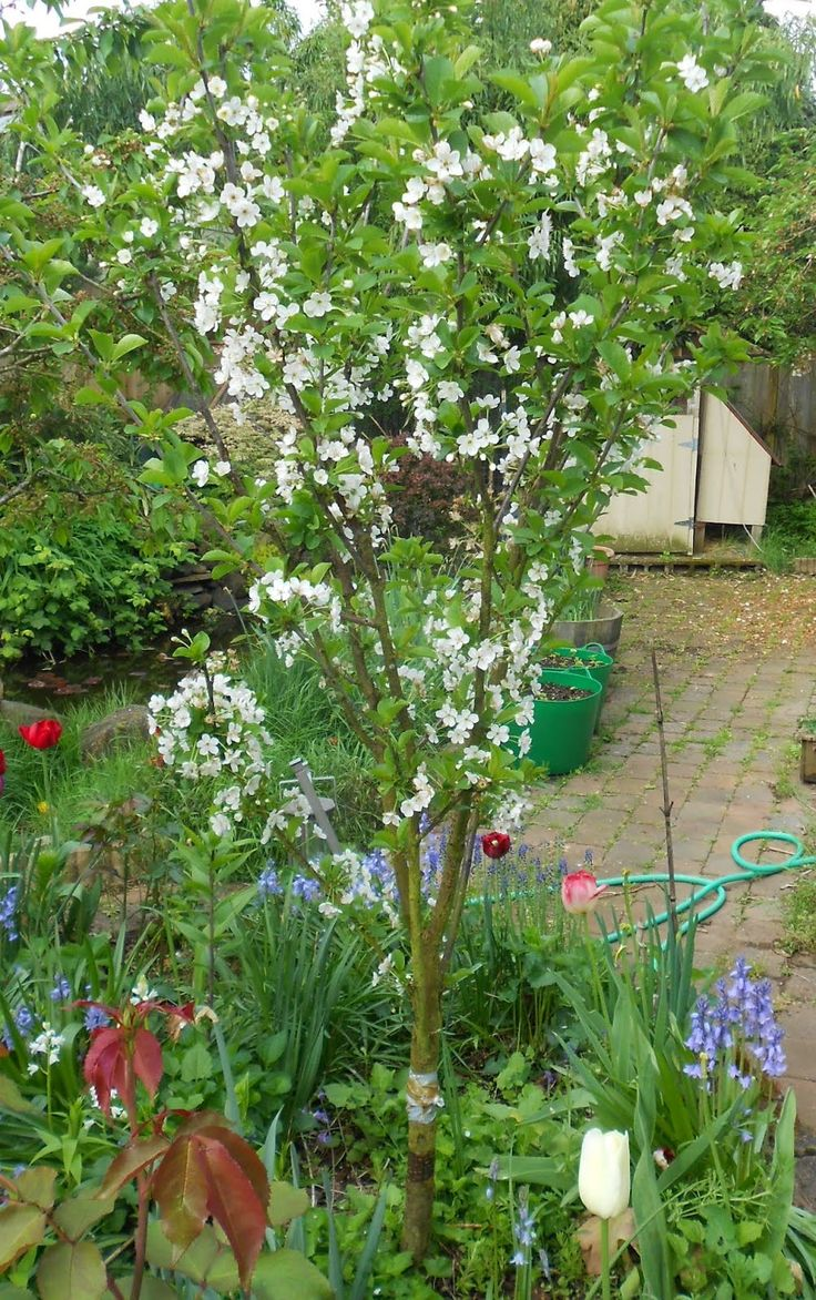 24 best backyard orchard culture images on pinterest orchards