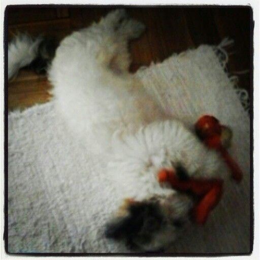 Rocky Puppy