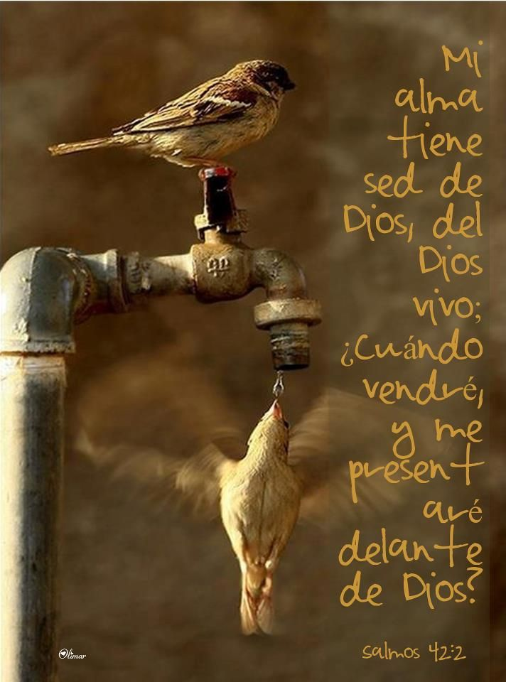 Salmo 42:2 - I thirst for God, the living God.     When can I go and present myself before him?
