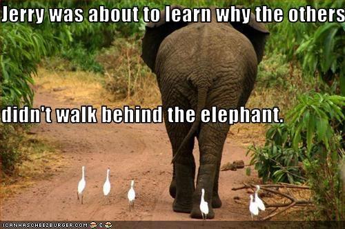Never walk behind an elephant...