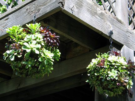 Hanging Succulent Flower Arrangement| http://flower-arrangement-ideas-wayne.blogspot.com