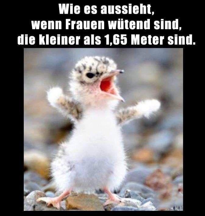 Frauen lustig lustige Bilder sagen Sprüche Junk. Wenn sie wütend sind  # – #Bi… – Berlin haddershild