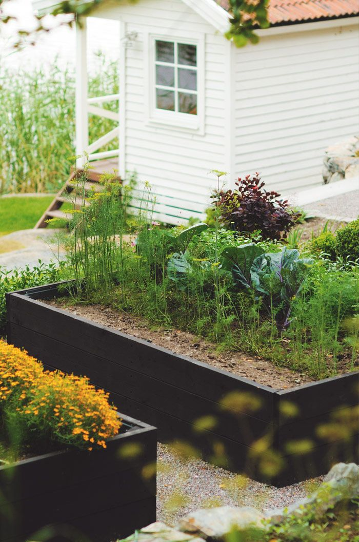 black raised beds w/ gravel path - love the height of these raised beds, would make gardening much easier on your back and knees