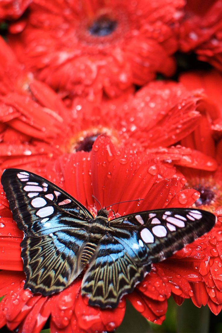 Butterfly Garden at Singapore's Changi Airport. Step outside into the topical oasis and watch as thousands of butterflies fly, rest of pineapple slices or seek nectar from the flowers.