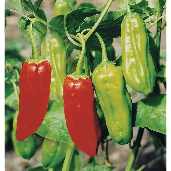 25 best ideas about carolina reaper scoville on pinterest - Best romanian pepper cultivars ...