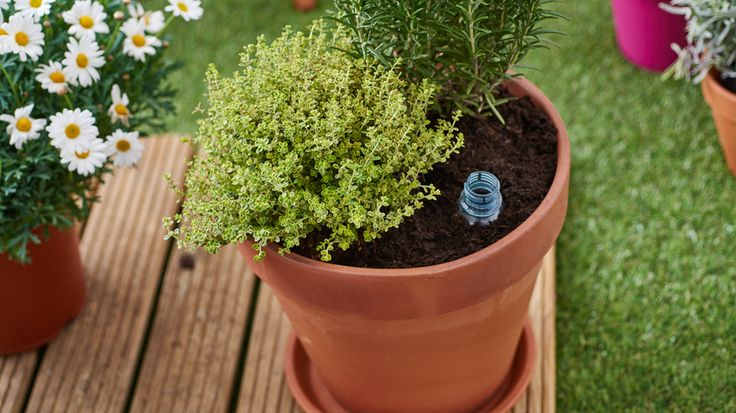 Keep your potted plants alive while you're away with these clever watering tricks.