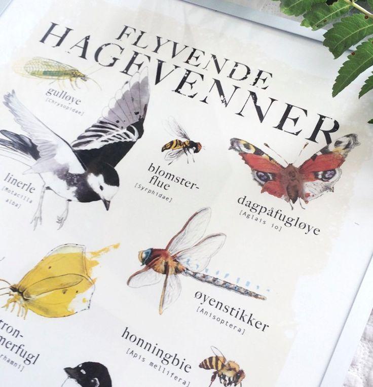 """Plakat: """"Flyvende hagevenner"""".Alle """"hagevennene"""" har latinske navn under sine norske navn.Teknikk: Akvarell og blyant.Trykkes på kvalitetspapir, selges uten ramme, og send..."""