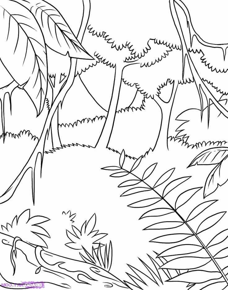 Coloring Pictures Of Rainforest Animals Beautiful the Best