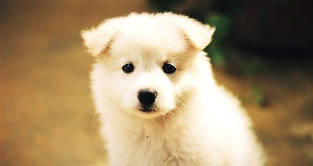 мимишные собаки