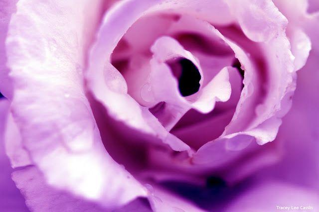 Mia Bella Passions: Raindrops on Roses...