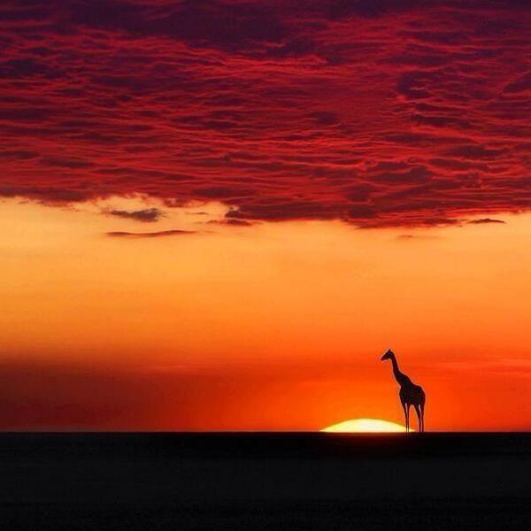 La magia de África.
