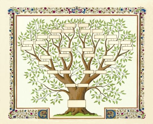 Modele Dessin Arbre Genealogique Gratuit - Ask.com Image Search