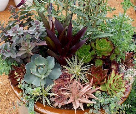 Κάκτοι και παχύφυτα - Γιατί να τα προτιμήσετε - Φυταγορά Σερρών