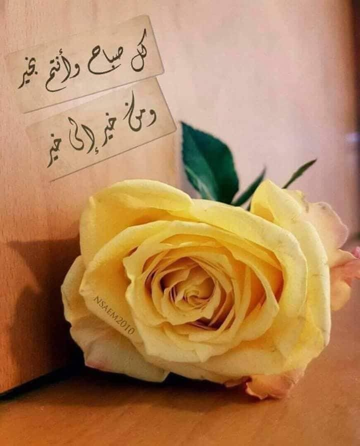 صباح الخيرات Good Morning Gif Rose Morning Images