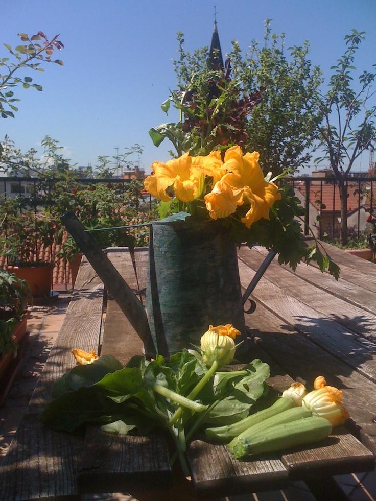 fiori x l'insalata