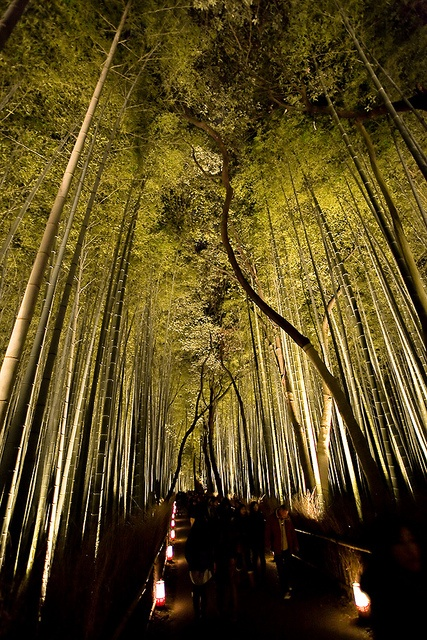 Bamboo forest at night in Arashiyama, Kyoto, Japan