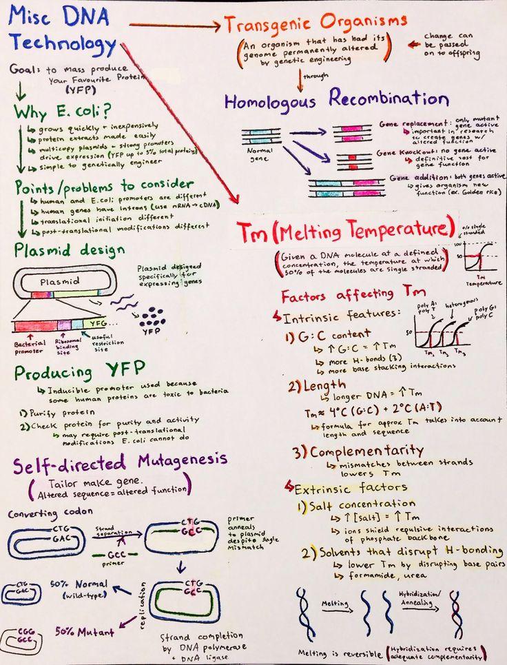 biology dna notes essay