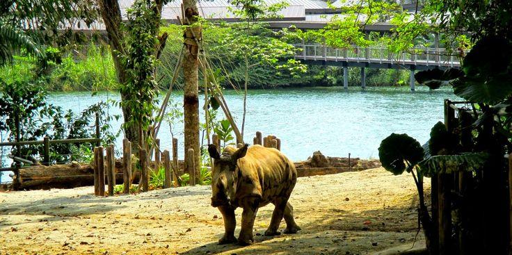 Apen matkat: Singapore, osa 1, eläintarhassa