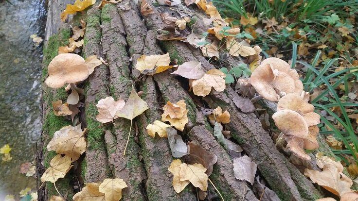 Funghi e foglie