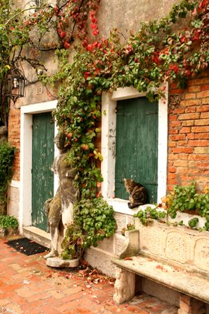 Cat in window -  Island of Torcello, Italy
