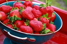 Frugal Kitchen Tip: How to keep Strawberries (and other berries too!) fresh longer!