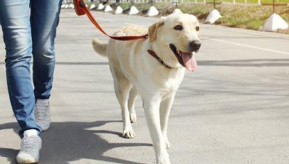 3 consejos para pasear al perro #mascotas #perros