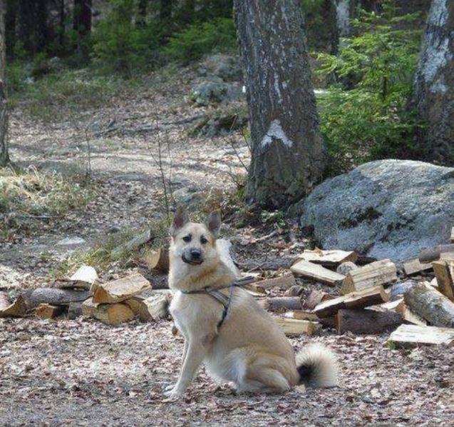 My dog (Nipsu) at Nuuksio National Park.