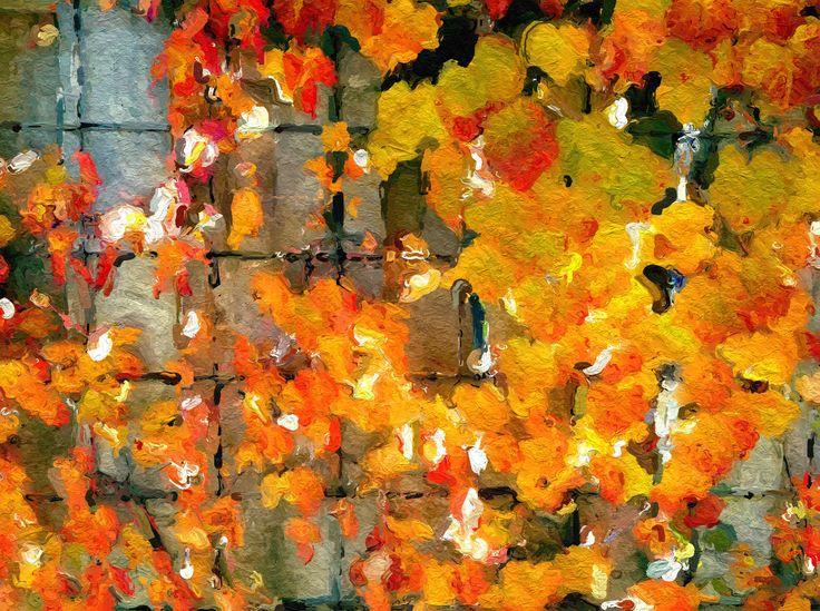 Autumn Ivy - Peterborough, Ontario, Canada ©NoticePictures