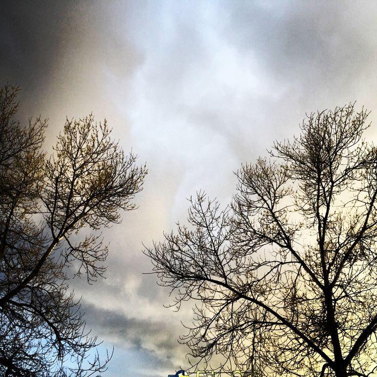 Attimi! #lueskys #cloudstagram #arezzo #Tuscany #instadaily #nature #attimi #light #skylovers #skystyles_gf #ic_skies #alberi #tree #colour #iloveclouds #iskygram #clouds #natureaddict #natureelite #nature_sultans #tagsta_nature  #instasky #instalike #skystyles #photoglobe #insta_pick_skyart  #heavenly #beautiful #sunlight  #instalove